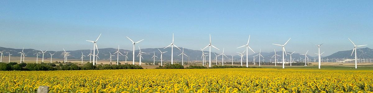 wind farm yellow flowers